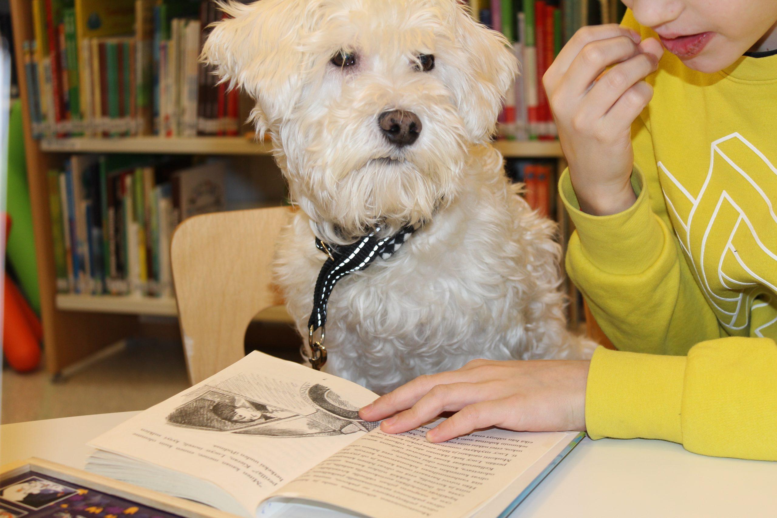 Lukulemmikki Fanni kirjastossa